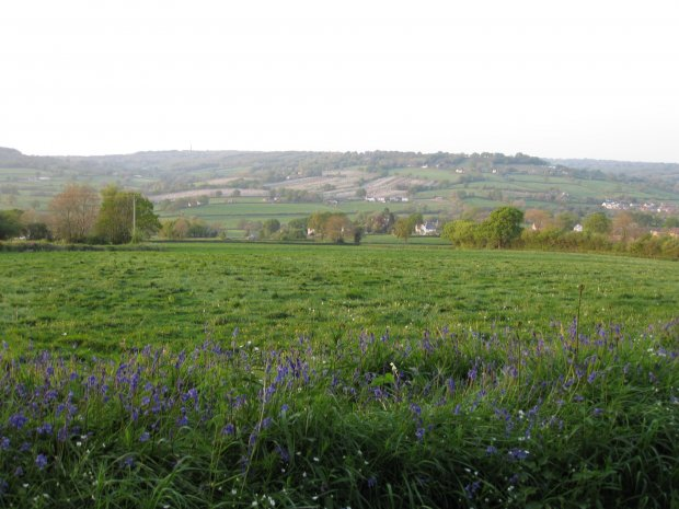 Bluebells and apple blossom
