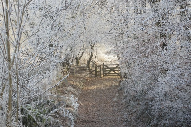 Frosty 2nd gate at Ashculme Turbary.