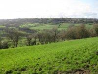 Burrow Hill from Ridgewood
