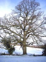 View around Hemyock Feb 09